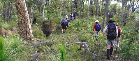 Bushwalking open forest